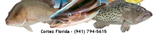Stray Dog Fishing Charters, Cortez, Florida
